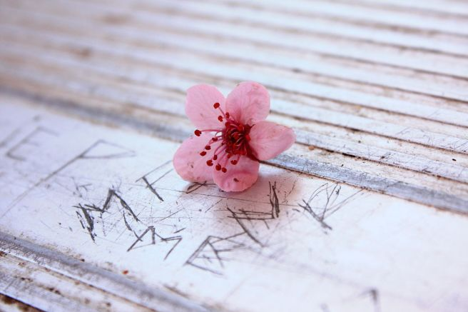 """""""Free Unedited Pretty Little Pink Flower on The Scratched Park Picnic Table Creative Commons (3457443391)"""" by Pink Sherbet Photography from USA - Free Unedited Pretty Little Pink Flower on The Scratched Park Picnic Table Creative Commons. Licensed under CC BY 2.0 via Wikimedia Commons."""